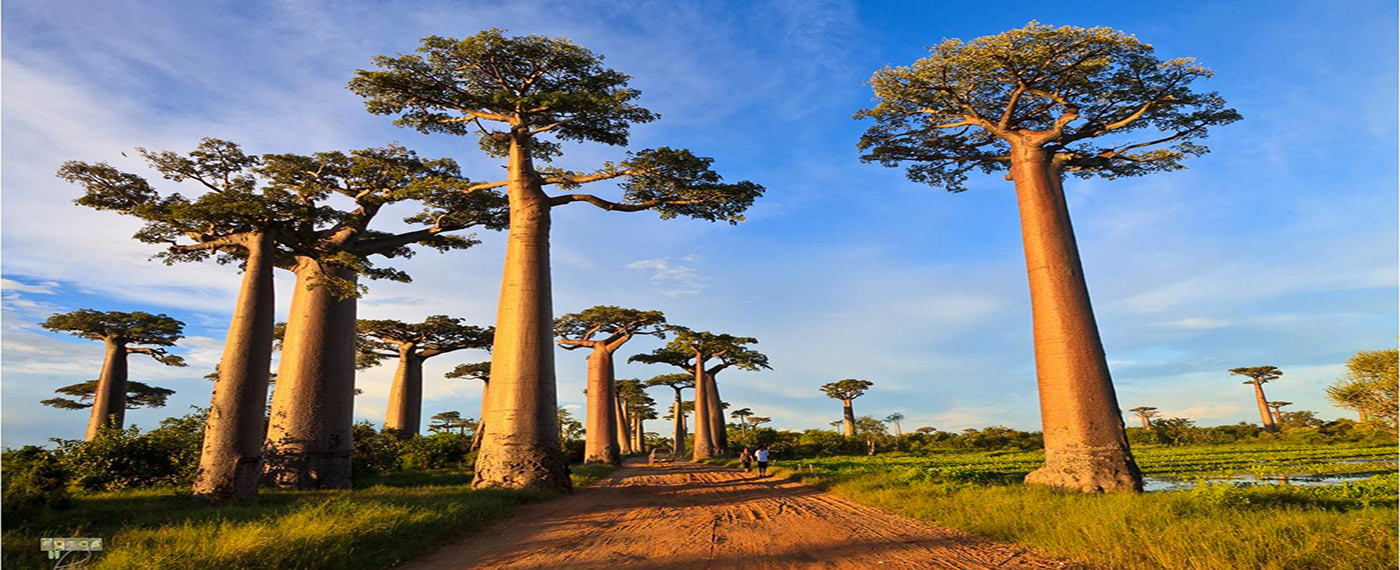 (English) Five incredible aspects that you probably didn't know about Madagascar