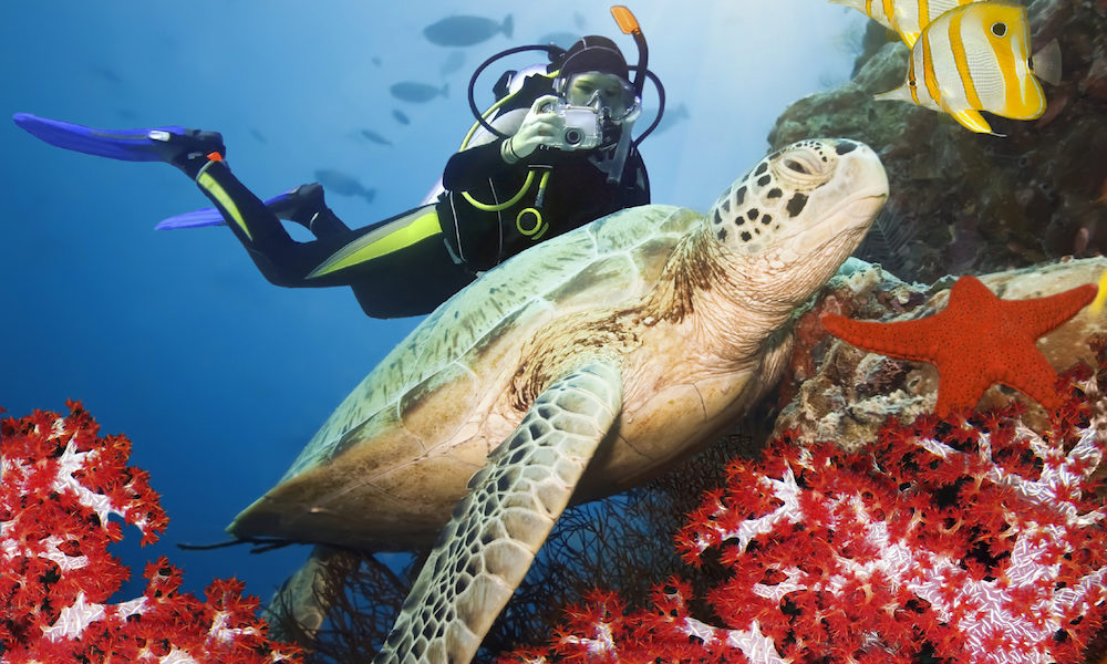 (English) To all nature lovers … visit Sri Lanka from April to July is the best time to spot turtles and from this year Sport is the king
