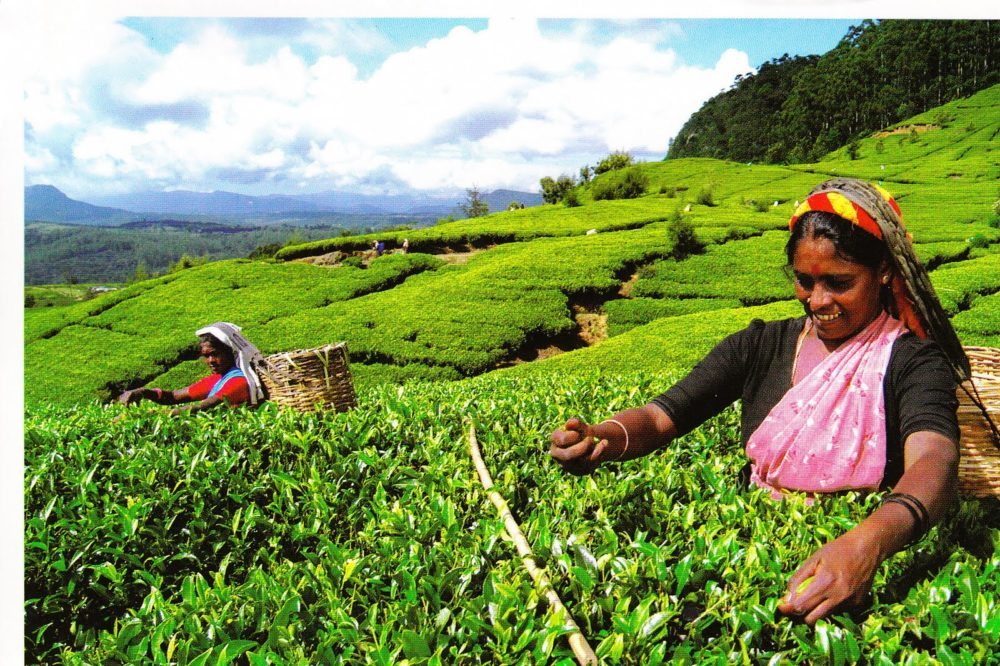 (English) JETWING ITALIA is increasingly Social and supports the INSTAGRAM CAMPAIGN on SUSTAINABLE TOURISM launched by JETWING GROUP in SRI LANKA